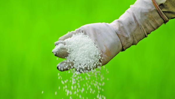 ပုလဲမြေသြဇာကို အကျိုးရှိစွာ အသုံးပြုနည်း