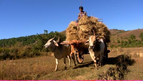 ဆန်စပါးအထွက်နှုန်းမြင့်မားရေးအတွက် လမ်းညွှန်ချက်များ