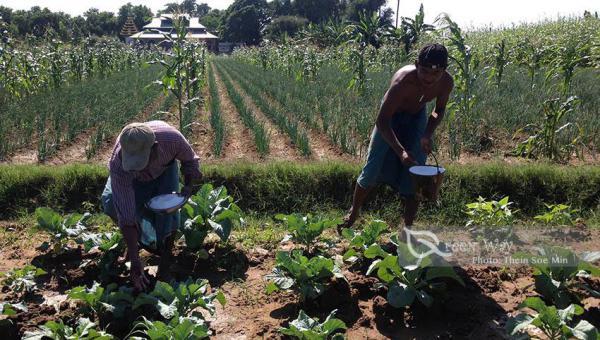 စိုက်ပျိုးရေးစနစ် အတွက် မှန်(၄)မှန်နှင့် မြေသြဇာအသုံးပြုရေး အတွက် မှန်(၄)မှန်
