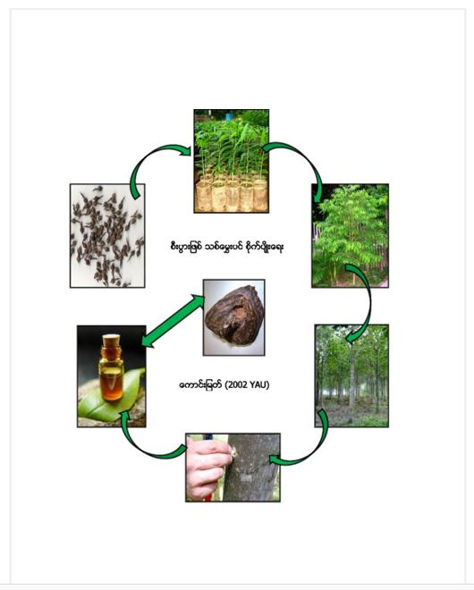 စီးပွားဖြစ် သစ်မွှေးပင် စိုက်ပျိုးရေး