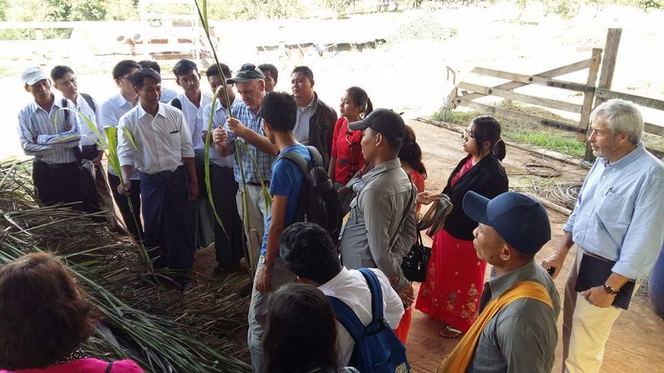 မြန်မာ နယူးဇီလန် နို့စားနွားမွေးမြူရေး ဖွံ့ဖြိုးတိုးတက်ရေး စီမံကိန်း