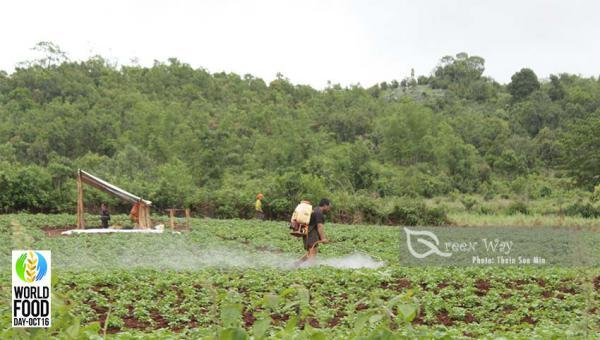 စိုက်ပျိုးရေးထွက်ကုန်များ အရည်အသွေးနိမ့်လို့ တင်ပို့ခွင့်မရတာတွေရဲ့ နောက်ကွယ် ( ၂၀၁၆ ကမ္ဘာ့စားနပ်ရိက္ခာနေ့ အထိမ်းအမှတ်ဆောင်းပါး )