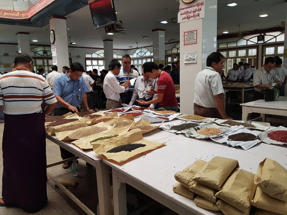 တရုတ်က မတ်ပဲ စတင်ဝယ်လာသဖြင့် မန္တလေးပဲစျေးကွက်တွင် ပဲစျေးပြန်မြင့်လာ