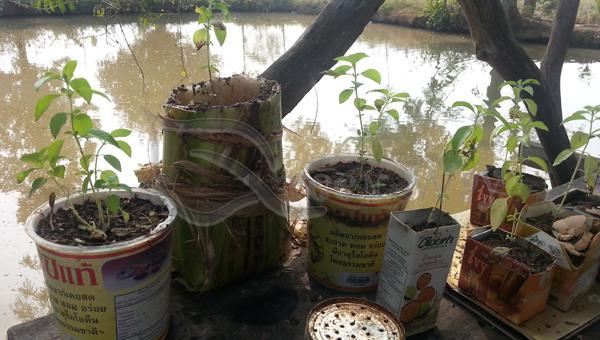 ငှက်ပျောဖတ်နဲ့ ပျိုးအိတ်ပြုလုပ်နည်း