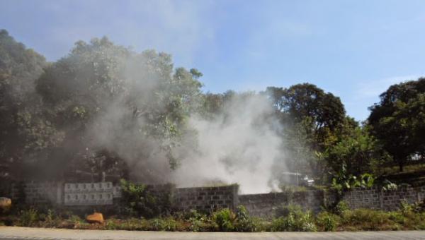 သရက်ပင်အား မီးခိုးမှိုင်းတိုက်ခြင်း