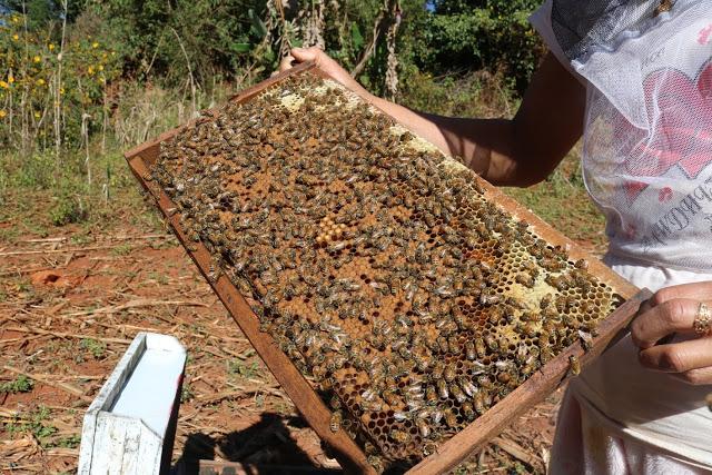 မကွေးတိုင်းဒေသကြီးမှ ပုဂ္ဂလိက ပျားမွေးမြူထုတ်လုပ်သူများ ဝင်ငွေကောင်းနေ