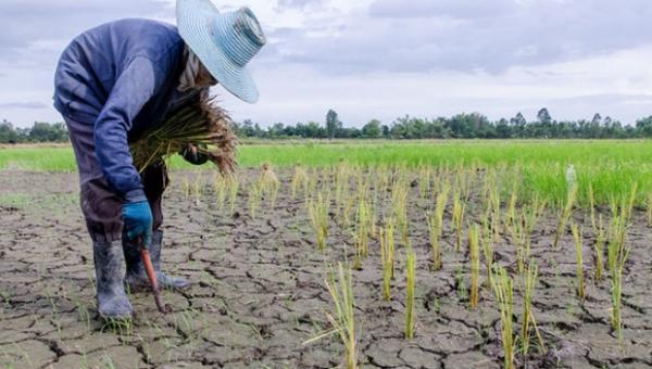 ရာသီ ဥတု ပြောင်းလဲခြင်းနှင့် စိုက်ပျိုးရေး လုပ်ငန်း အပိုင်း (၂)