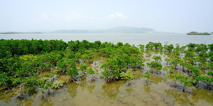 မြို့နယ်လေးခုတွင် ဒီရေတောများစိုက်ပျိုးရန် စီစဉ်နေ