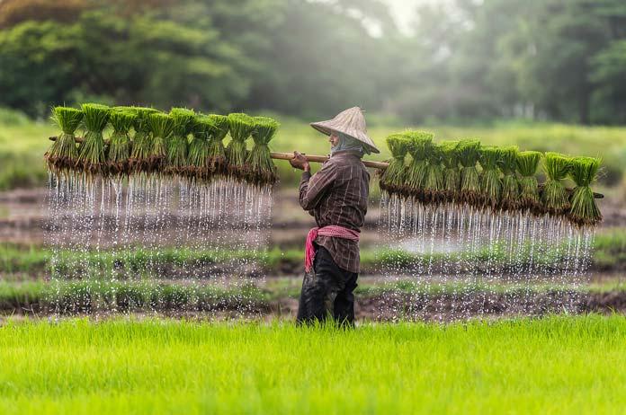 တောင်သူများအတွက် ရေရှည်တည်တံ့သော စိုက်ပျိုးရေးကဏ္ဍတစ်ခု အကောင်အထည်ဖော်နိင်ရန် လွှတ်တော်တွင် အဆိုတင်၍ စတင်ဆွေးနွေး