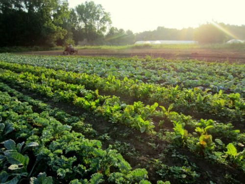 အစားအစာဘေးကင်လုံခြုံပြီး အဟာရပြည့်ဝသော စိုက်ပျိုးရေးထွက်ကုန်များ ဖူလုံစွာစားသုံးနိုင်ရေး