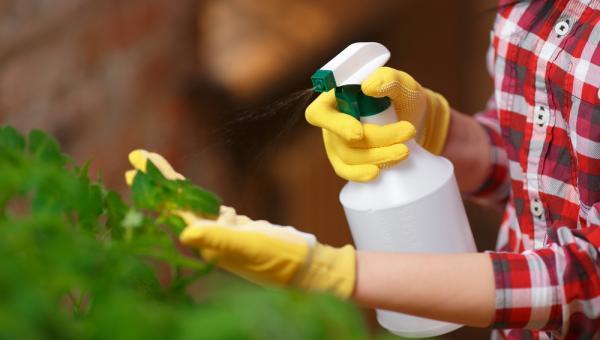 အပင်အခြေခံ ပိုးသတ်ဆေးများ ပြုလုပ်သုံးစွဲခြင်း