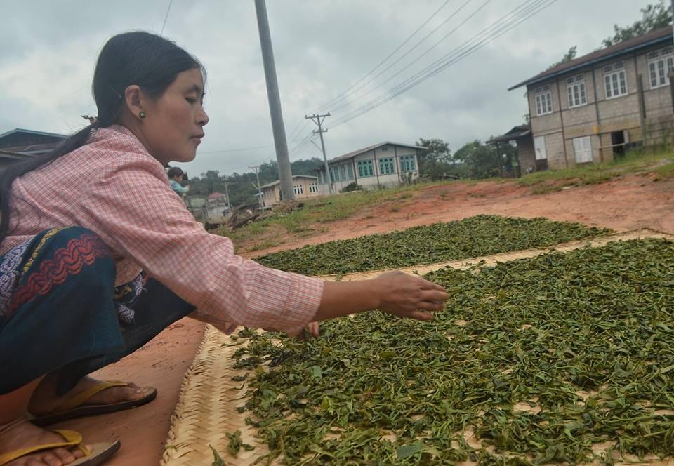 လက်ဖက်ခြောက် ပိုကောင်းရန် နည်းလမ်းဟောင်းကို ပြုပြင်ရမည်