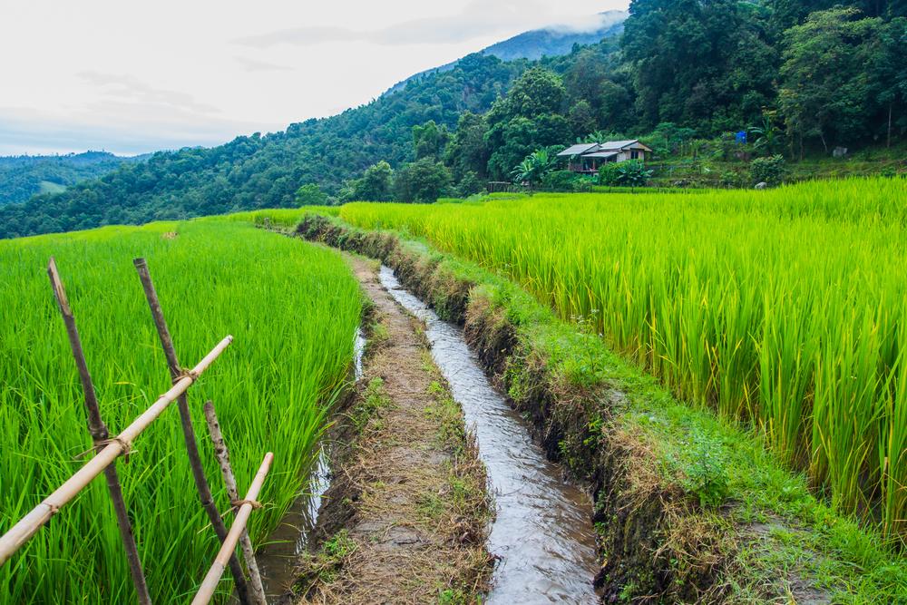 စိုက်ပျိုးရေးကဏ္ဍ ဖွံ့ဖြိုးတိုးတက်မှု အထောက်အကူပြုစီမံကိန်း ဖော်ဆောင်သွားမည်