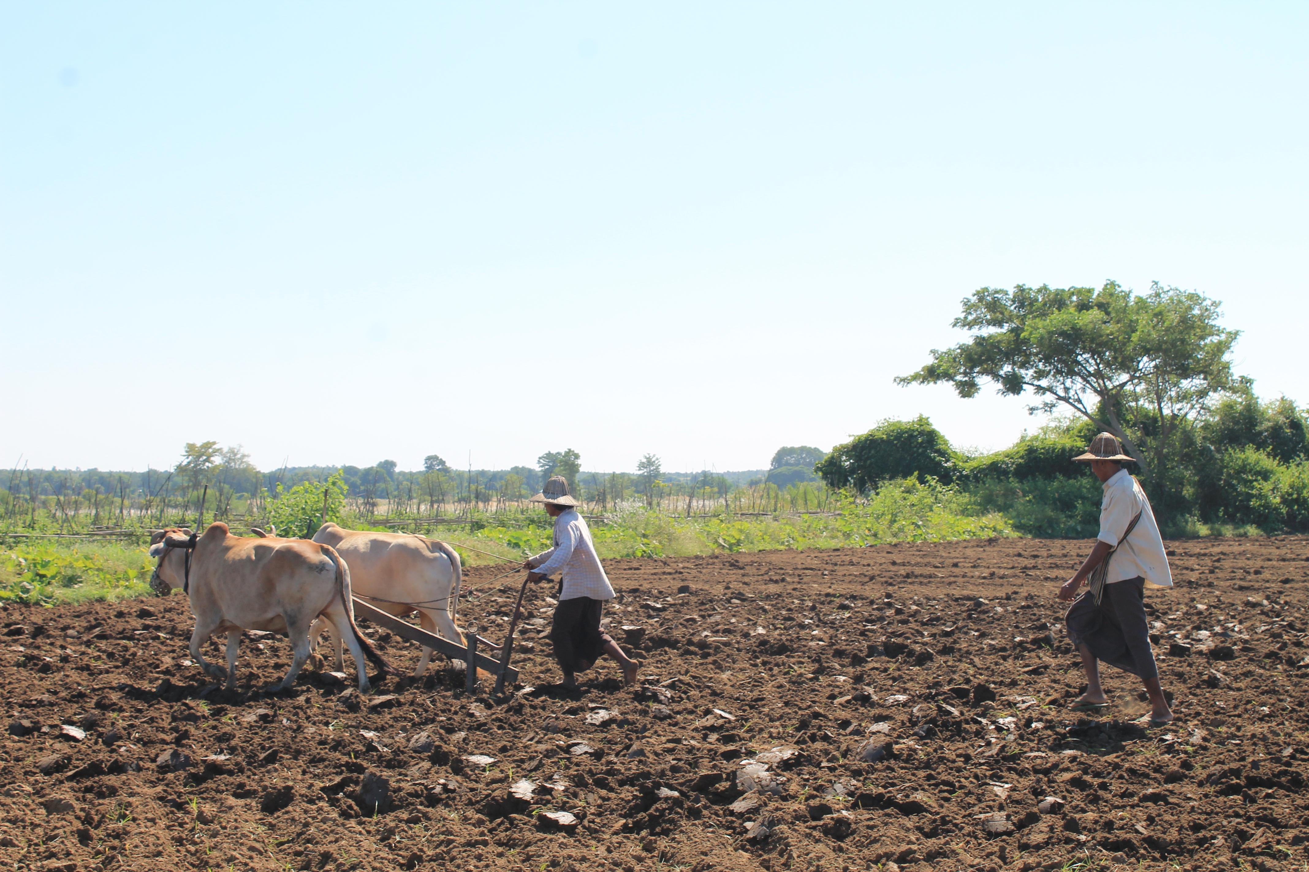 စိုက်ပျိုးရေးလုပ်ငန်းများတွင် နည်းပညာနှင့် စီးပွားရေးလုပ်ငန်းများ ပူးပေါင်းဆောင်ရွက်ရန် ထိုင်းနိုင်ငံရင်းနှီးမြှုပ်နှံမှုဘုတ်အဖွဲ့နှင့် မန္တလေးရှိ လုပ်ငန်းရှင်များဆွေးနွေး