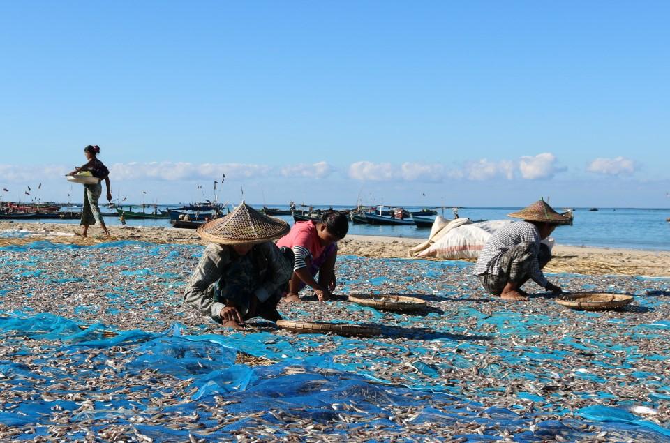 ငါးခြောက်ကုန်ကြမ်းတင်သွင်းခွင့် ရပ်ဆိုင်းထားမှုကြောင့် ငါးခြောက်ပွဲရုံ (၆၀) ရာခိုင်နှုန်းနီးပါး လုပ်ငန်းများ ရပ်ဆိုင်း