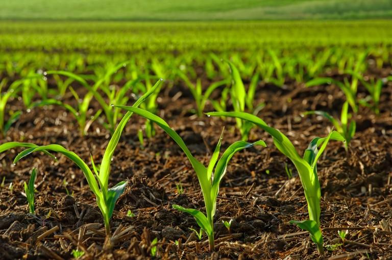 ယမ်းစိမ်းမြေသြဇာနှင့် စိုက်ပျိုးရေး အပိုင်း (2)