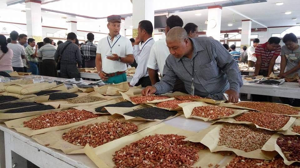 တရုတ်နိုင်ငံ ပဲတီစိမ်းနှင့် ထောပတ်ပဲကို အဓိကထား ဝယ်ယူနေ