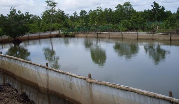 ရန်ကုန်တိုင်းတွင် ငါးကန်လိုင်စင်ကြေး ပေးသွင်းရန် ကျပ်သိန်း ၁၅၀၀ ကျော်ရှိနေ