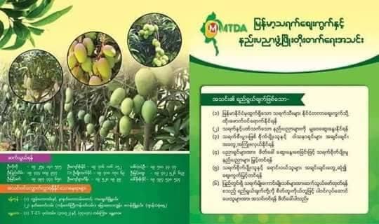 မြန်မာ့သရက်စျေးကွက်နှင့် နည်းပညာဖွံ့ဖြိုးတိုးတက်ရေးသတင်း