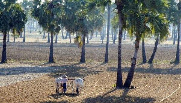 ရာသီဥတုနှင့်လျော်ညီ အညာဒေသ၏ပဒေသာပင်