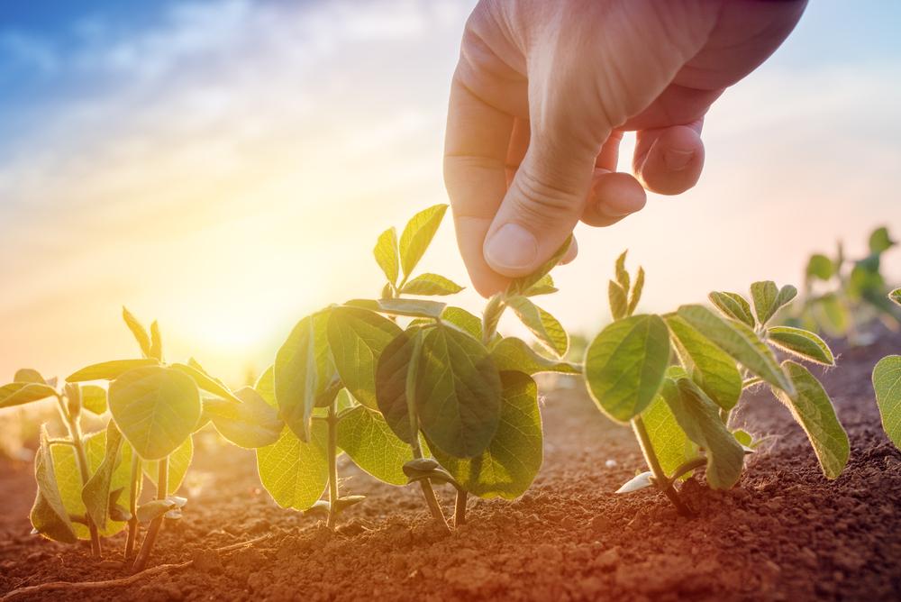 ရာသီဥတုနှင့်အညီ စိုက်ပျိုးနည်းစနစ်များ ပြောင်းလဲစိုက်ပျိုးရန် လိုအပ်