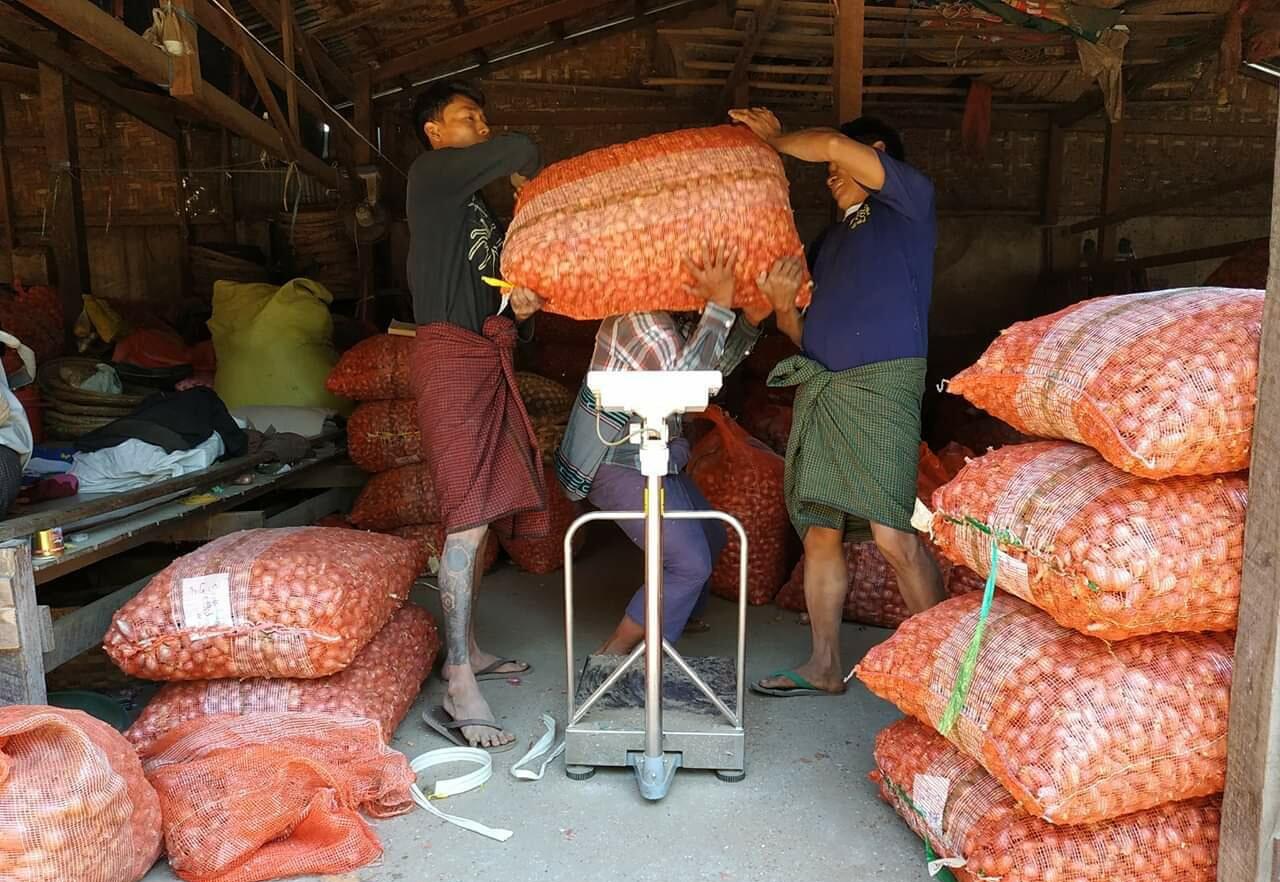 ကြက်သွန်နီ အထွက်နှုန်းတိုးလာသဖြင့် ပြည်တွင်း၌ ကြက်သွန်ဈေးနှုန်းများ ကျဆင်းနေ