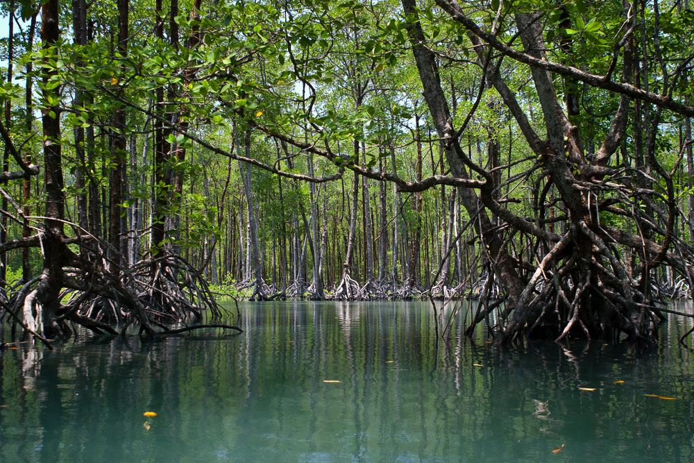 ဒီရေတောတွေဟာ ဘာကြောင့် လိုအပ်သလဲ?