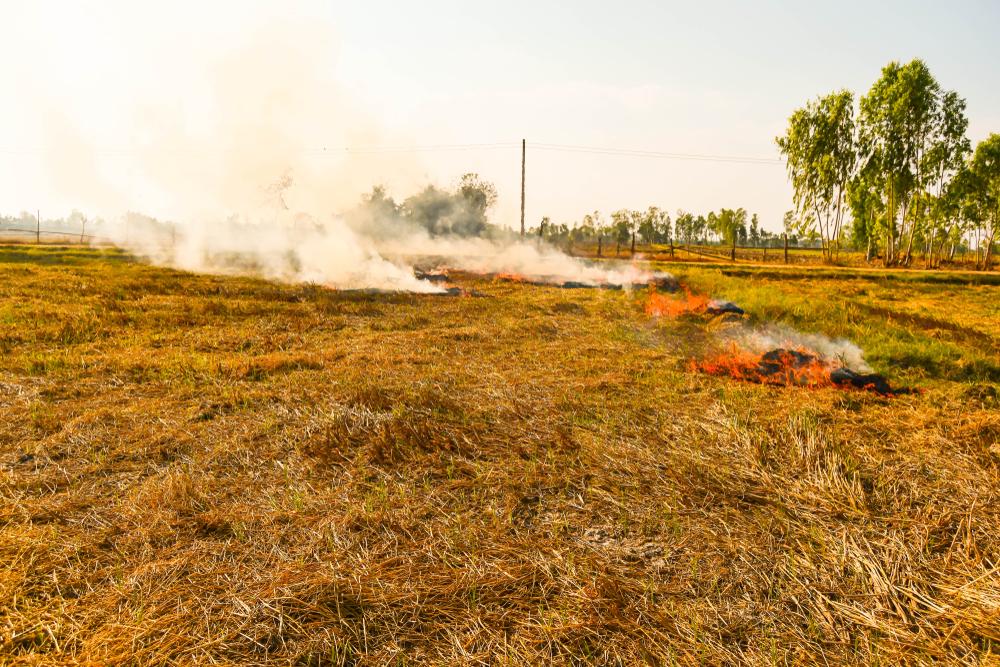 စိုက်ပျိုးမြေပေါ်တွင် မီးရှို့ခြင်းနှင့် သိကောင်းစရာများ