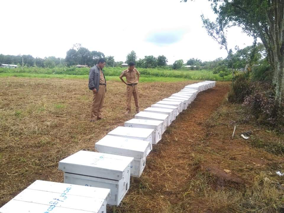 တစ်ပိုင်တစ်နိုင် ပျားမွေးမြူရေးလုပ်ငန်းများ ပေါ်ပေါက်လာရေး ပညာပေးမည်