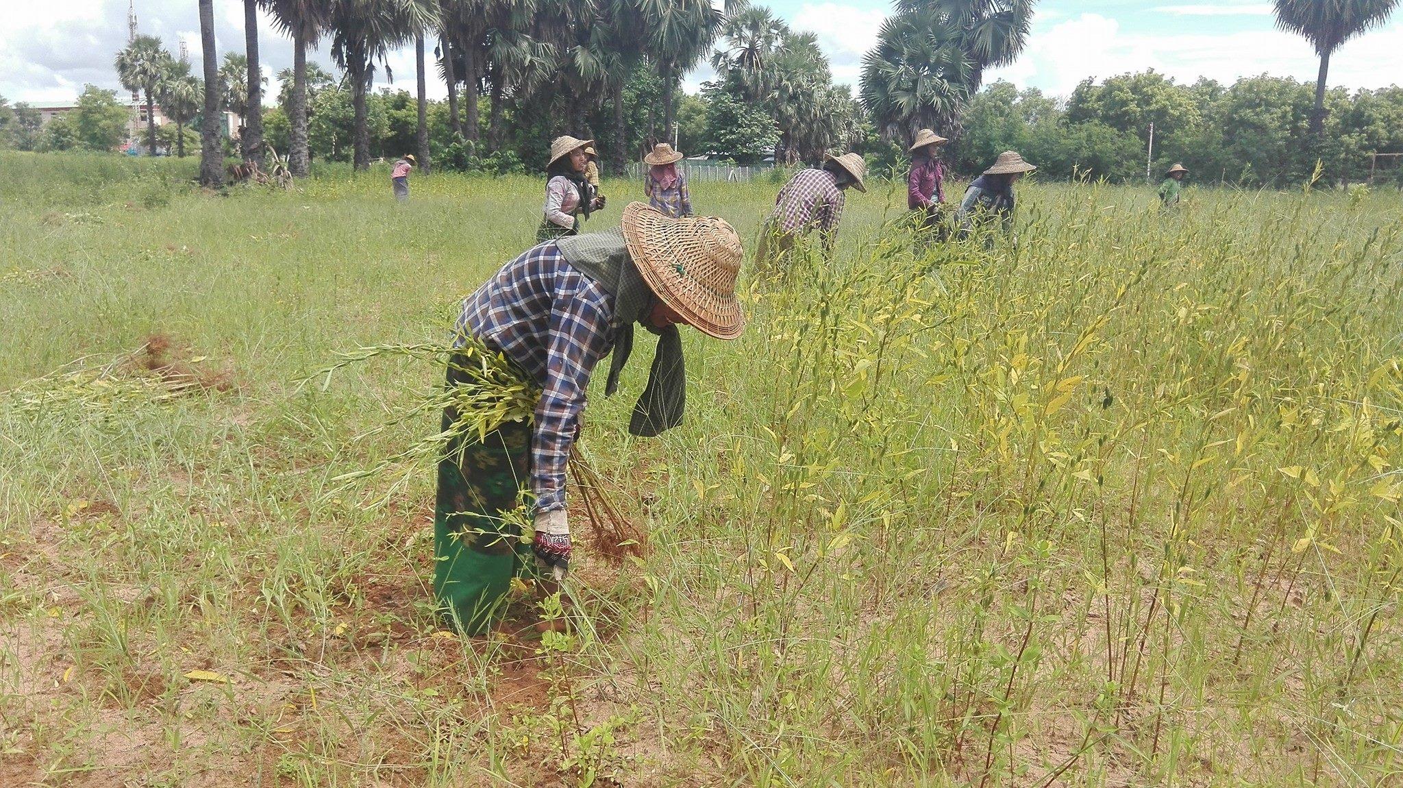 အပူပိုင်းဇုန်မှ တောင်သူအတွက် ရာသီဥတု ဖောက်ပြန်မှုများကို ကာကွယ်နိုင်ရန် ပြင်ဆင်မှုများ လုပ်ဆောင်သွားမည်