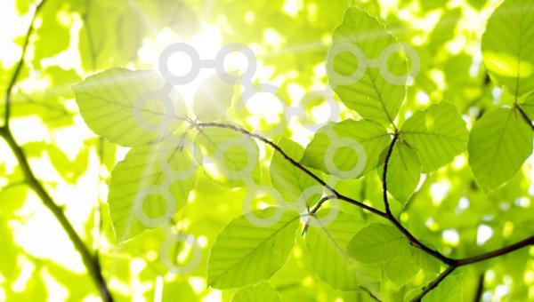 အပင်နဲ့ပတ်သတ်သော ရောင်ခြယ်ဆဲလ်များနဲ့ ဟော်မုန်းများ