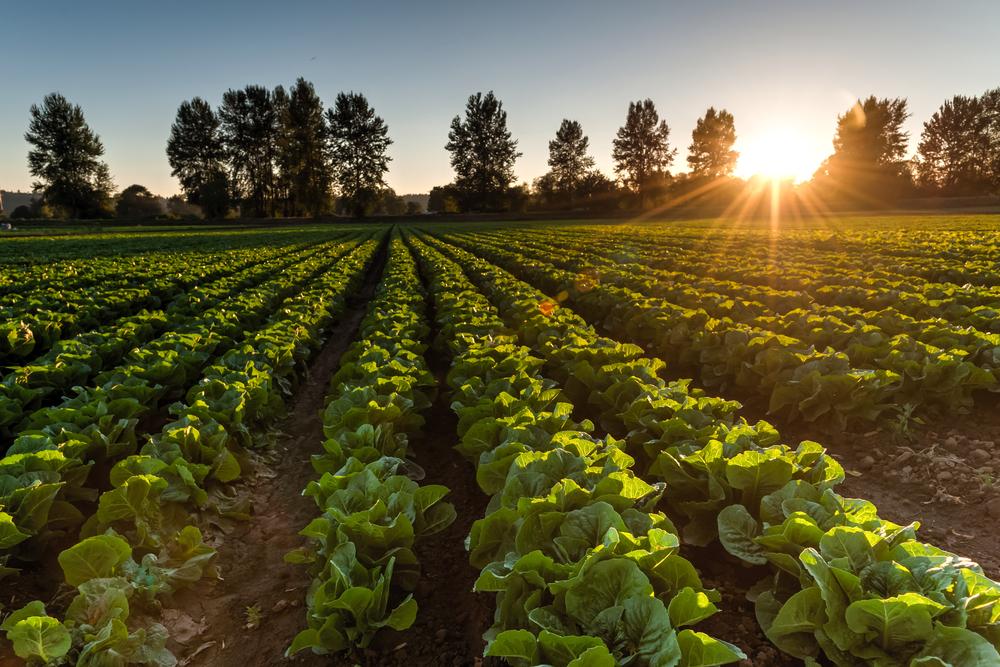 စိုက်ပျိုးရေးဖြင့် စီးပွားတက်စေဖို့ (၂)