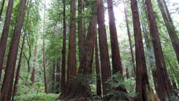 Wi-Fi ရေဒီယိုလှိုင်းများကြောင့် အပင်များသေဆုံး