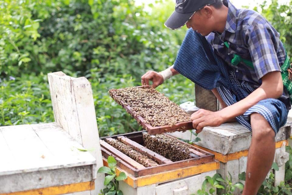 ဂျပန်မှ ပျားရည်ဝယ်ယူမှု များပြားနေသဖြင့် တစ်တန်လျှင် ကန်ဒေါ်လာ ၁၇၀၀ ထိရရှိနေ
