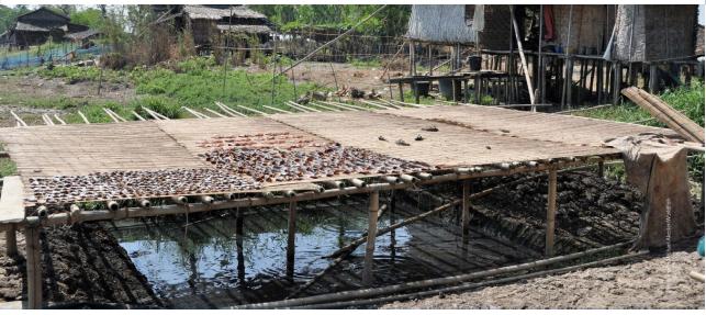 မြန်မာနိုင်ငံတွင် ရှမ်းပြည်နယ်နှင့် စစ်ကိုင်းတိုင်းဒေသကြီး တစ်ပိုင်တစ်နိုင် ငါးမွေးမြူရေးတွင် ထုတ်လုပ်မှု၊ အာဟာရဖြည့်ဆည်းခြင်းနှင့် စျေးကွက်တိုးတက်လာစေရန် ကူညီမှု စီမံကိန်း