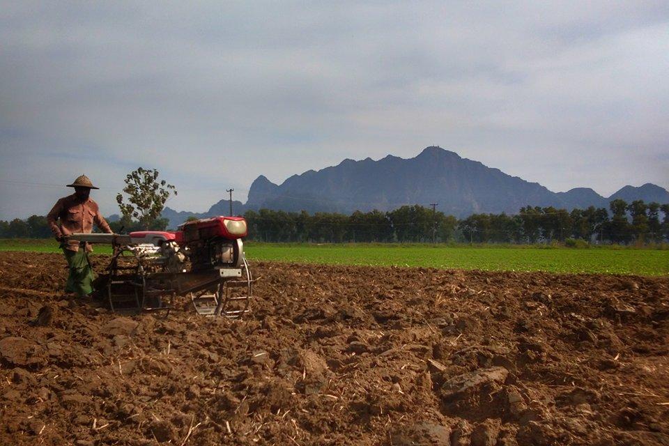 ချင်းတွင်းမြစ်ရေ ဝင်ရောက်သော ပေါက်အင်းရေဝင် ဧရိယာအတွင်း ဒေသနှင့်ကိုက်ညီသော သီးနှံများ ပြန်လည်စိုက်ပျိုး