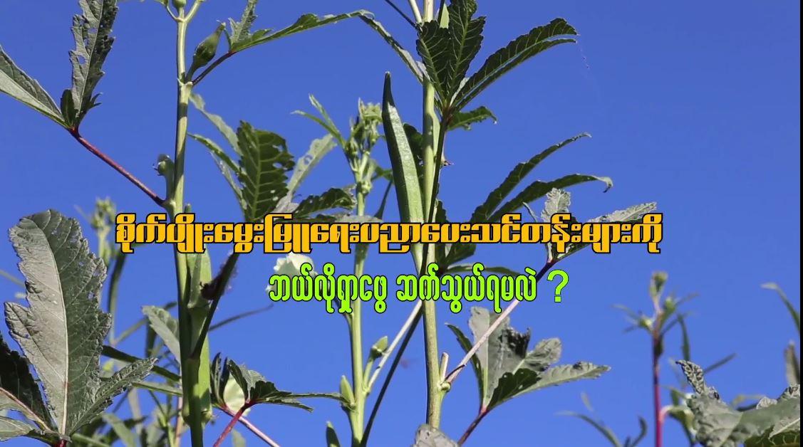 စိုက်ပျိုးမွေးမြူရေး ပညာပေးသင်တန်းများကို ဘယ်လို ရှာဖွေဆက်သွယ်ရမလဲ?????