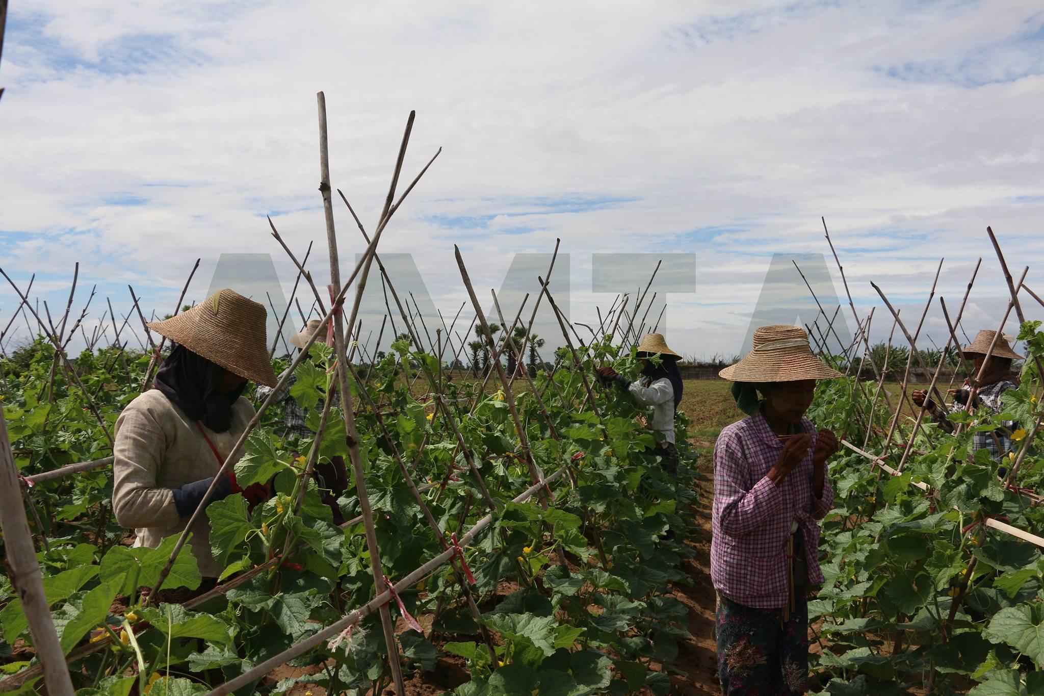 မြန်မာ- မလေးရှား စိုက်ပျိုးရေးထွက်ကုန်များ အပြန်အလှန် တင်ပို့နိုင်ရေးနှင့် ပူးပေါင်းဆောင်ရွက်မှု တိုးမြှင့်နိုင်ရေး ဆွေးနွေးထား