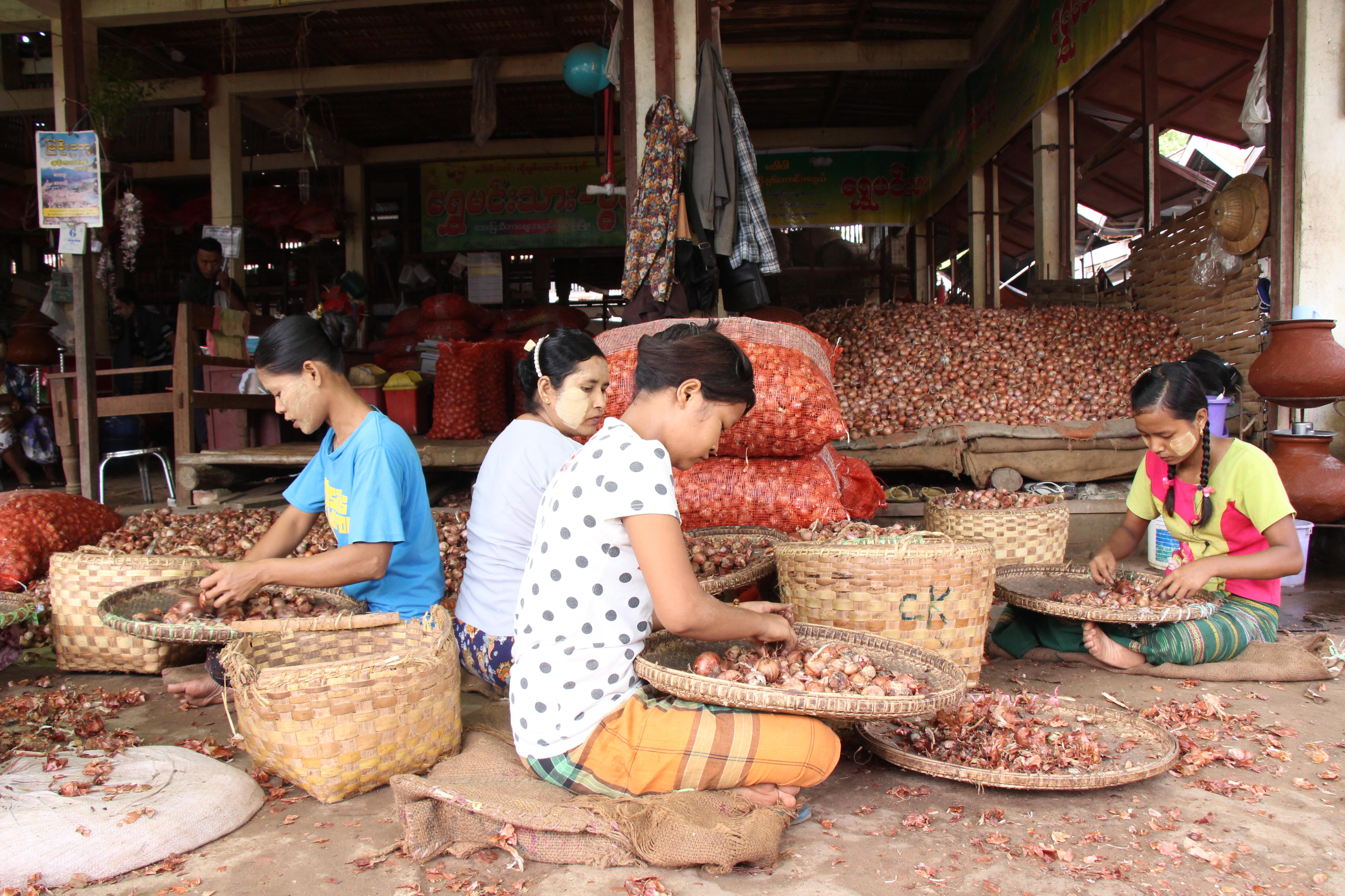 ပုလဲမြို့တွင် ကုလားပဲအစား ကြက်သွန်နီ ပြောင်းလဲစိုက်သူများလာ
