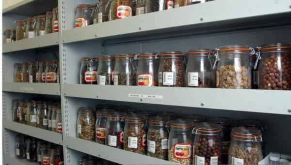 ဟင်းသီးဟင်းရွက်မျိုးစေ့များအား သိုလှောင်သိမ်းဆည်းခြင်း
