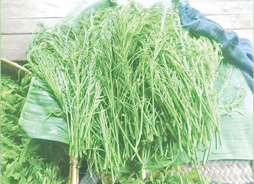 ပွင့်ဖြူဒေသမှ ဆူးပုပ်ပင်စိုက်တောင်သူများ ဝင်ငွေကောင်းနေကြ