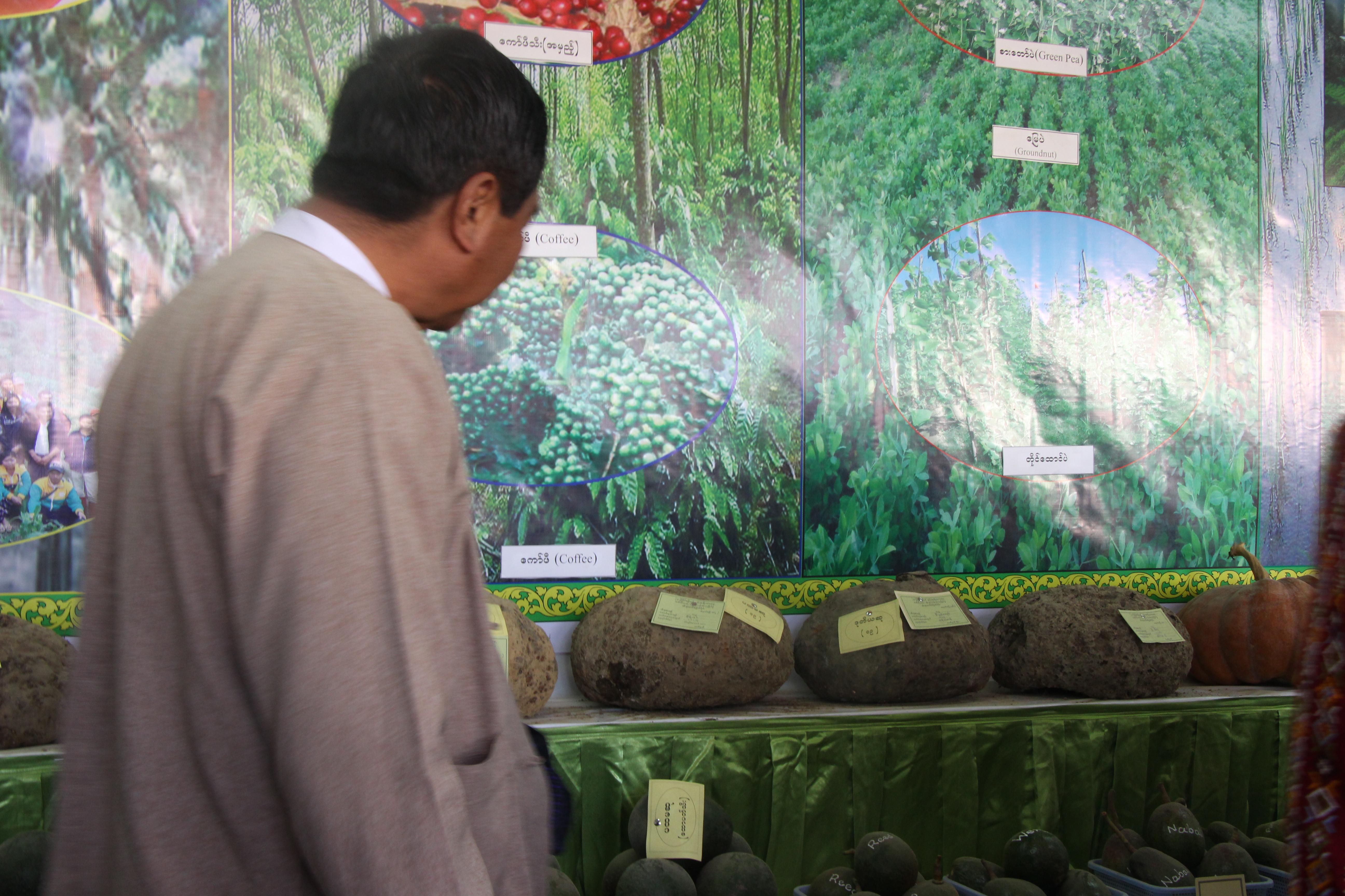သီးနှံ (၇) မျိုးအား စံချိန်စံညွန်းများ သတ်မှတ်ရေးဆွဲမည်