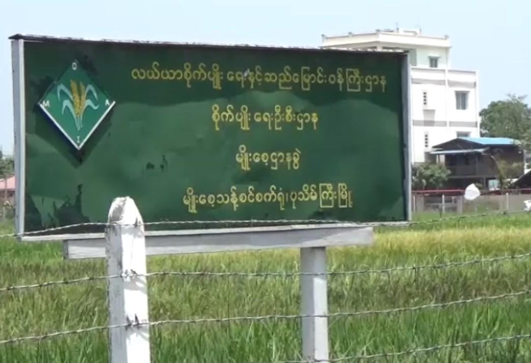 ရွှေဘိုခရိုင်တွင် သီးနှံများ မျိုးသန့်မျိုးစေ့ ဖူလုံရေးအတွက် အစိုးရ၊ ပုဂ္ဂလိက တောင်သူများ ပူးပေါင်း ဆောင်ရွက်နေ