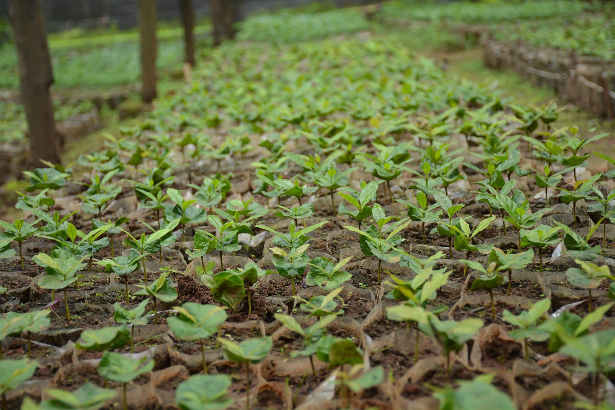 အပင်မျိုးစိတ်သစ်များကို ကာကွယ်ခွင့်ရရန်အတွက် စည်းမျဉ်း၊ စည်းကမ်းများနှင့်အညီ တရားဝင် လျှောက်ထားနိုင်