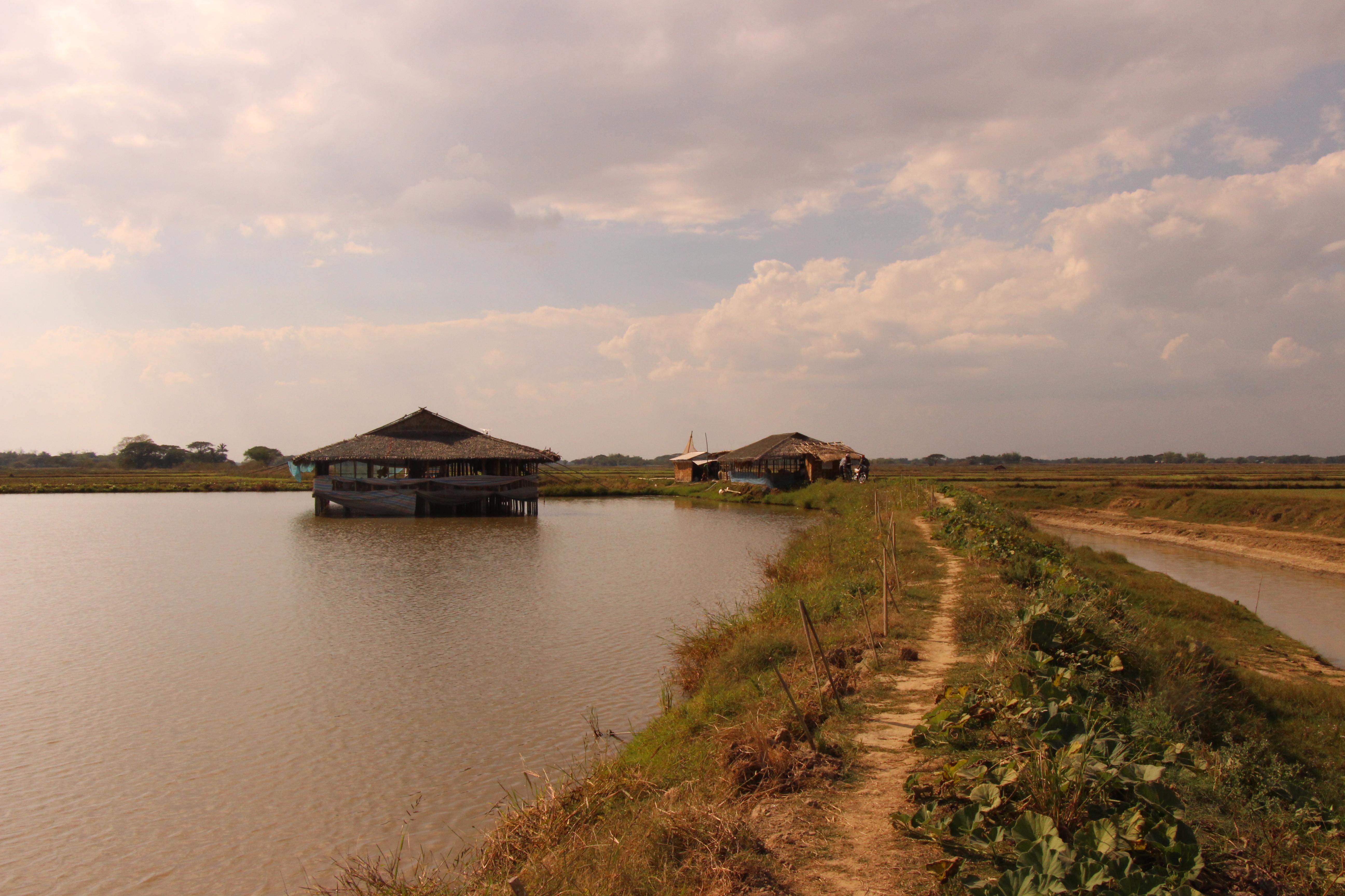 ငါးရှဉ့်မွေးမြူရေးလုပ်ငန်း အကျိူးတူလုပ်ကိုင်ရန် တရုတ်နိုင်ငံမှ လုပ်ငန်းရှင်များ လာရောက်ဆွေးနွေး