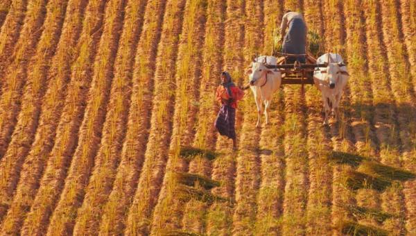ရာသီ ဥတု ပြောင်းလဲခြင်းနှင့် စိုက်ပျိုးရေး လုပ်ငန်း အပိုင်း (၁)