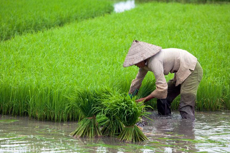 တောင်သူလယ်သမားကြီးများအတွက်နှိုးဆော်ချက် (ဇူလိုင်လ)