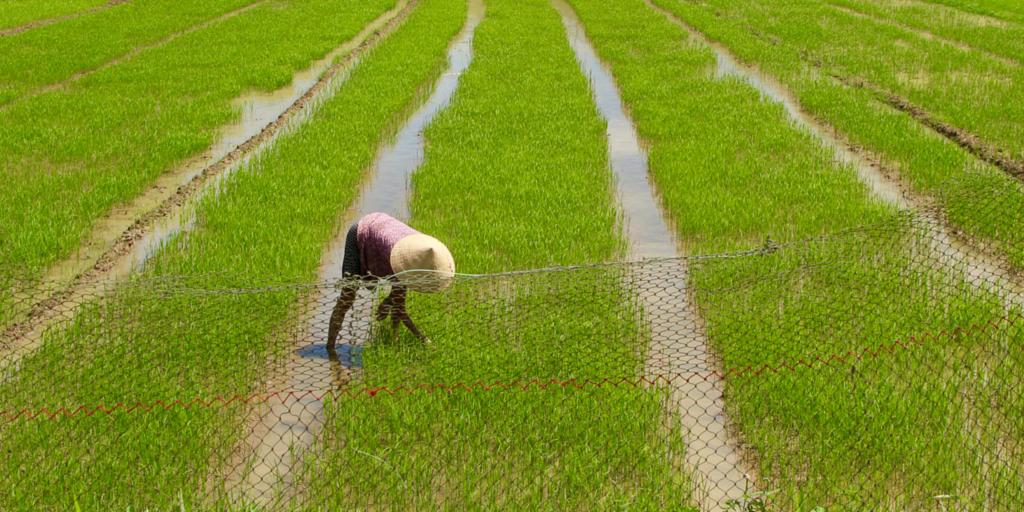 တောင်သူလယ်သမားကြီးများအတွက်နှိုးဆော်ချက် (ဖေဖေါ်ဝါရီလ)