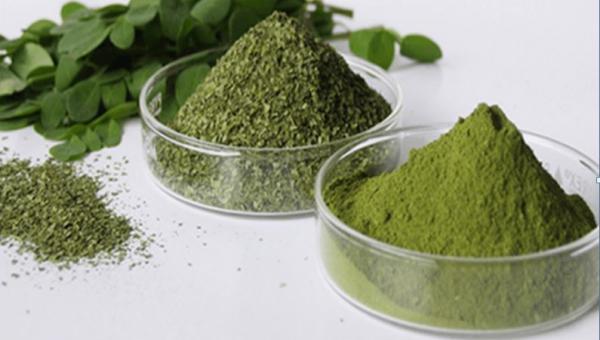 ကင်ဆာရောဂါပျောက်ကင်းပြီး ဆီးချိုရောဂါကို ဟန့်တားပေးနိုင်သော ဆေးဖက်ဝင် အပင်