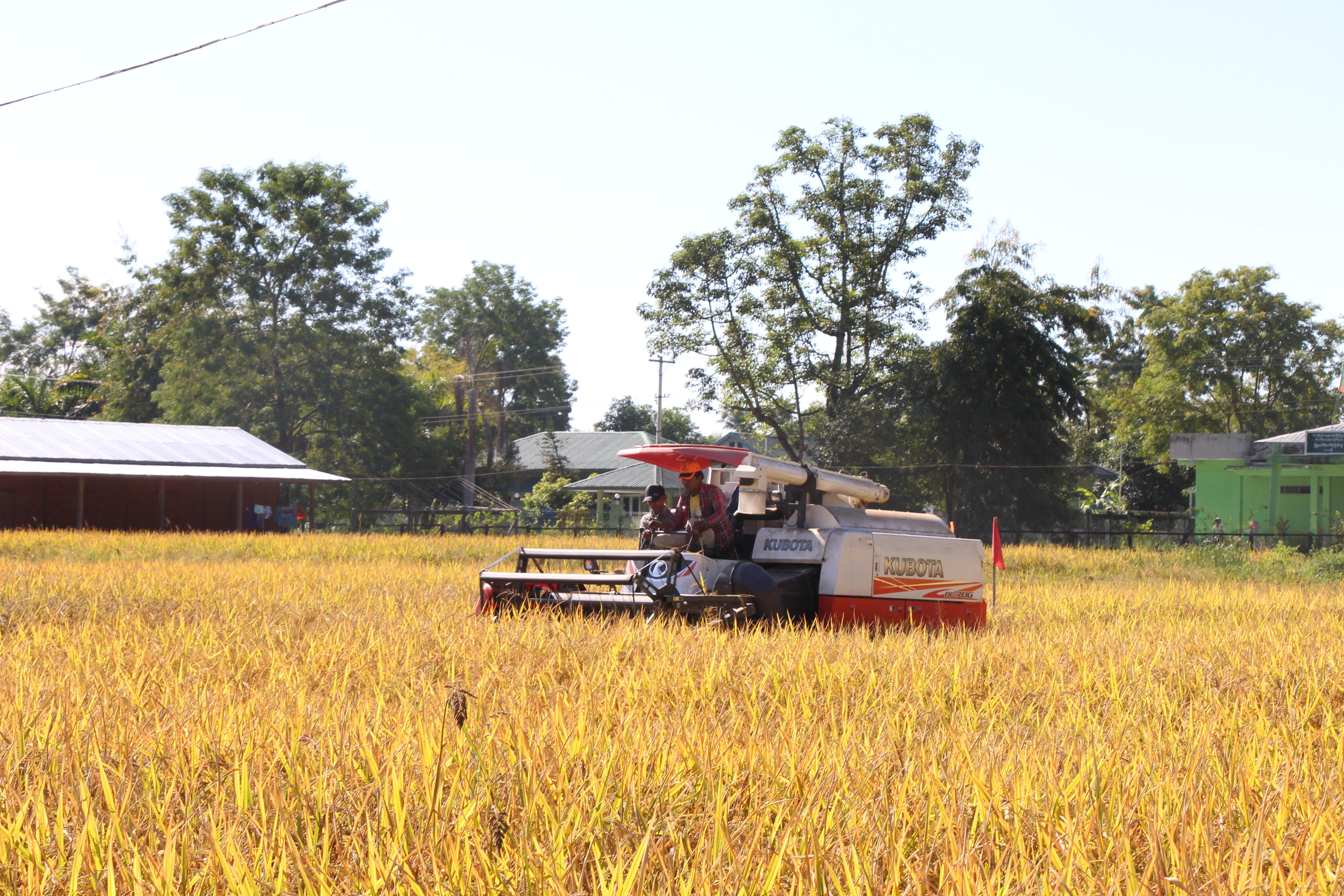 စိုက်ပျိုးရေးကဏ္ဍ ဖွံ့ဖြိုးတိုးတက်မှု အထောက်အကူပြု စီမံကိန်းကို ၇ နှစ်ခန့် ဆောင်ရွက်မည်